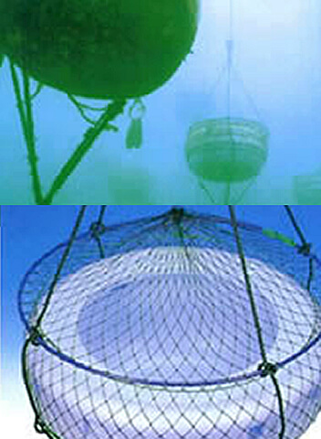 イシカゲガイ養殖容器